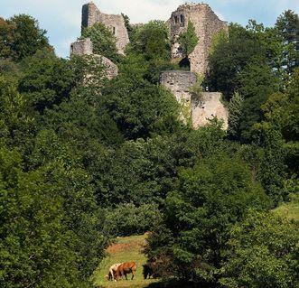 Burguine Badenweiler und weidende Kühe